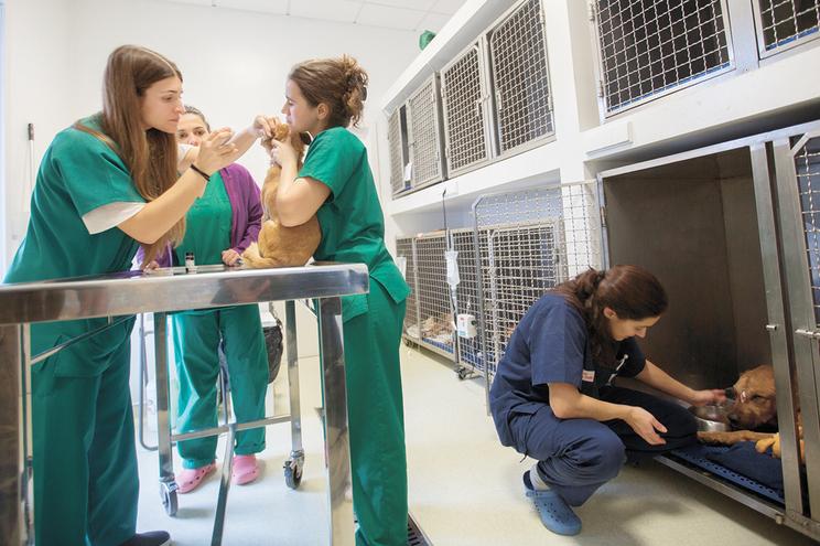 Preocupação com a saúde dos animais tem reflexos na longevidade