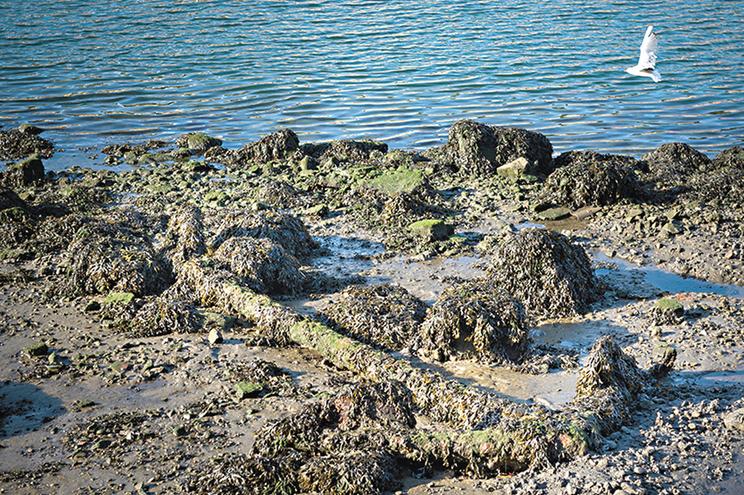 Âncora coberta de lodo e musgo na margem do rio Douro
