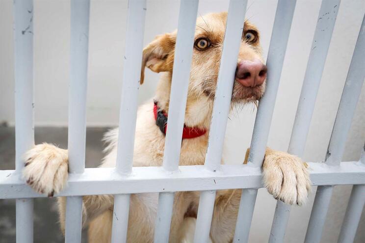 Um dos animais para adoção na CROAMO (Centro de Recolha Oficial de Animais do Município de Oeiras)