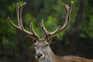 Atores locais, como autarquias e associações de caça e florestais, vão formar rede de monitorização nacional