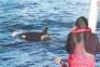 Ataques de orcas triplicaram este ano