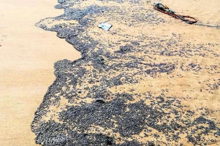 Mancha negra de resíduos dá à costa em Almada