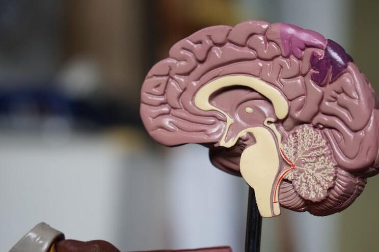 Estudo aponta para os astrócitos como o caminho do SARS-CoV-2 para o cérebro em algumas formas da doença