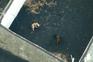"""Misteriosa """"Equipa A"""" resgata cães cercados por lava do vulcão Cumbre Vieja"""