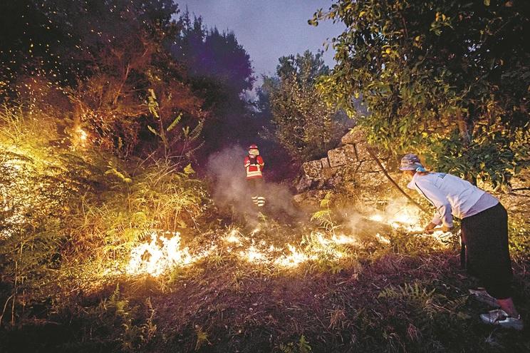 Objetivo é criar mosaicos com diferentes espécies e culturas para evitar fogos