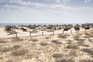 Região do Algarve é a que tem mais galardões