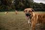 Cheque veterinário já tratou 5500 animais em 24 municípios