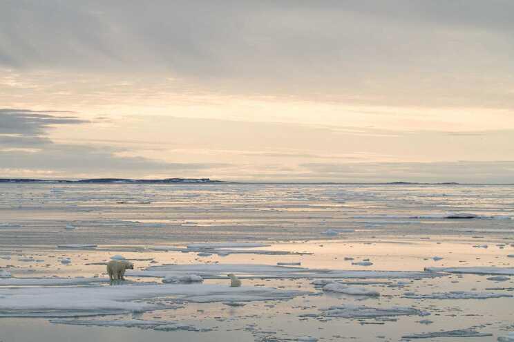 Um urso polar atacou um acampamento e matou um homem no arquipélago remoto de Svalbard