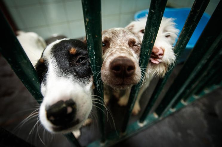 Crime de abandono de animais dispara com a pandemia