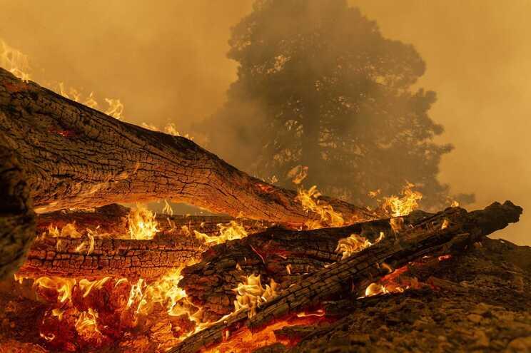Mais de 500 bombeiros e quatro helicópteros combateram o incêndio de setembro passado em El Dorado