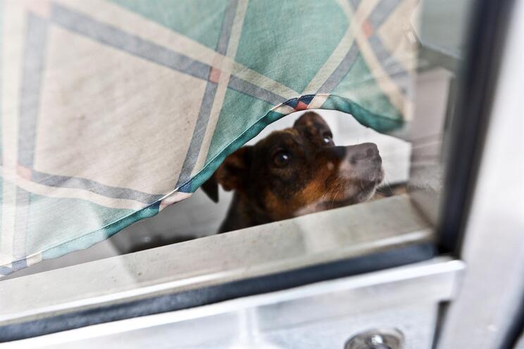 PAN quer proibir animais de companhia acorrentados e em varandas