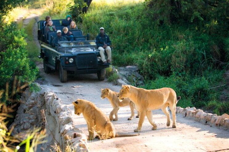 Elefante mata caçador ilegal e leões devoram corpo na África do Sul