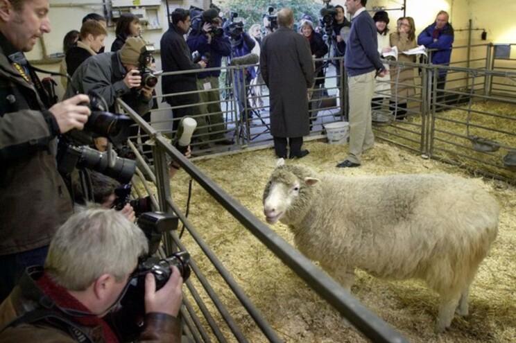 Foi há 25 anos que a ficção se tornou realidade com o nascimento de Dolly, a ovelha mais famosa do mundo