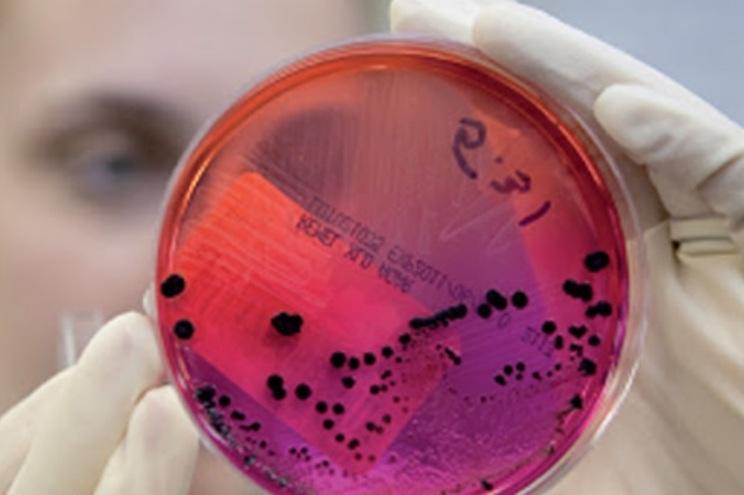 A PrimerGen estabeleceu colaboração com uma equipa de virologistas da Universidade British Columbia