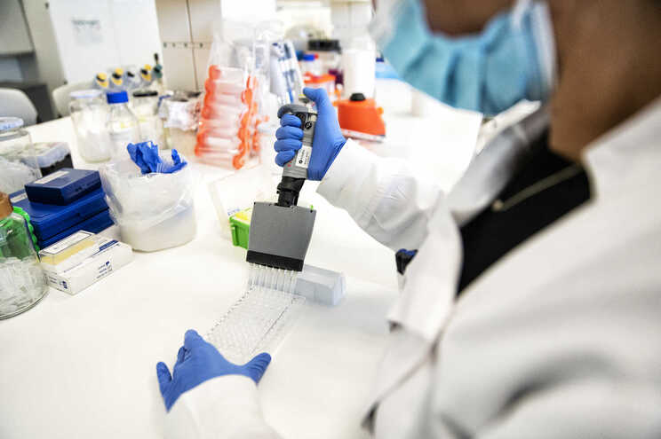 Investigadores examinaram as bactérias dominantes do intestino humano quanto à sua atividade contra o