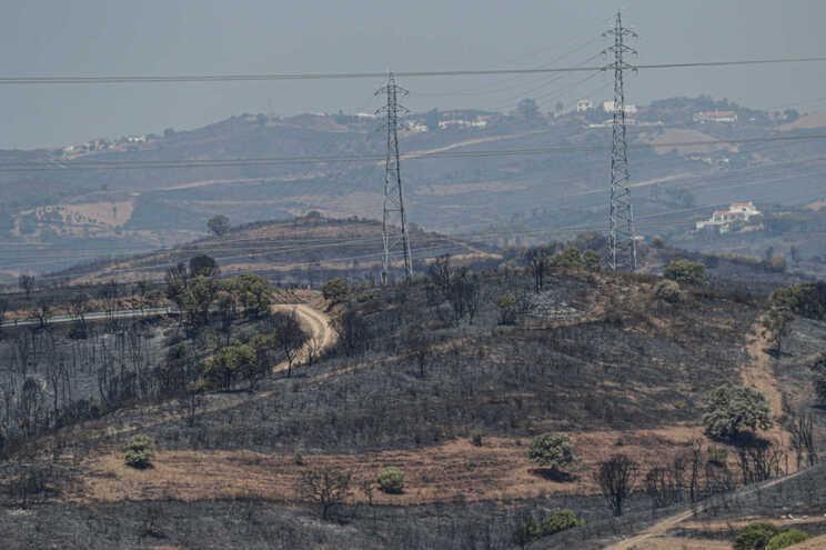 Animais acabaram por morrer no fogo que começou em Castro Marim e alastrou a Vila Real de Santo António