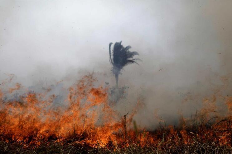 Número de incêndios no Brasil aumentou 83% este ano