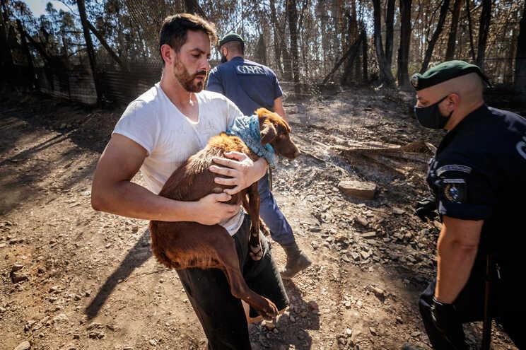 Populares entraram nos abrigos e retiraram os animais feridos