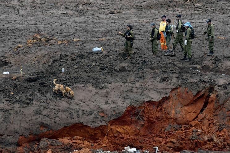 Número de mortos em desastre de Brumadinho sobe para 99