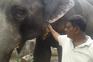 Indiano doa 2,5 hectares de terreno a dois elefantes