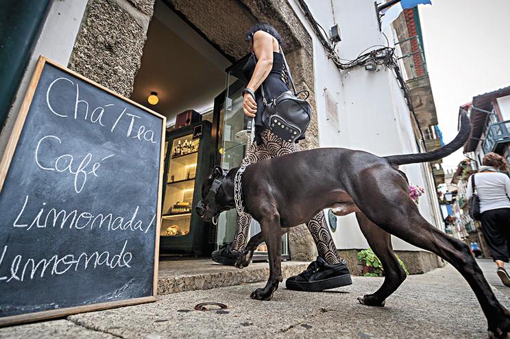 Receber animais é uma razão de atração de clientes