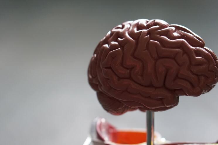 Os investigadores examinaram 41 cérebros de doentes que morreram durante a hospitalização
