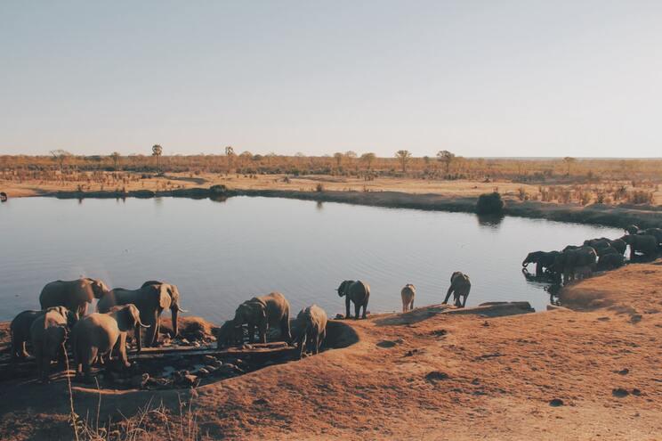 O país enfrenta a superpopulação de animais, ou seja, existem muitos e poucos recursos para sobreviverem
