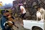 Polícia resgata animais de zonas afetadas pelo vulcão Cumbre Vieja