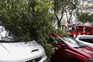 Registadas 138 quedas de árvore