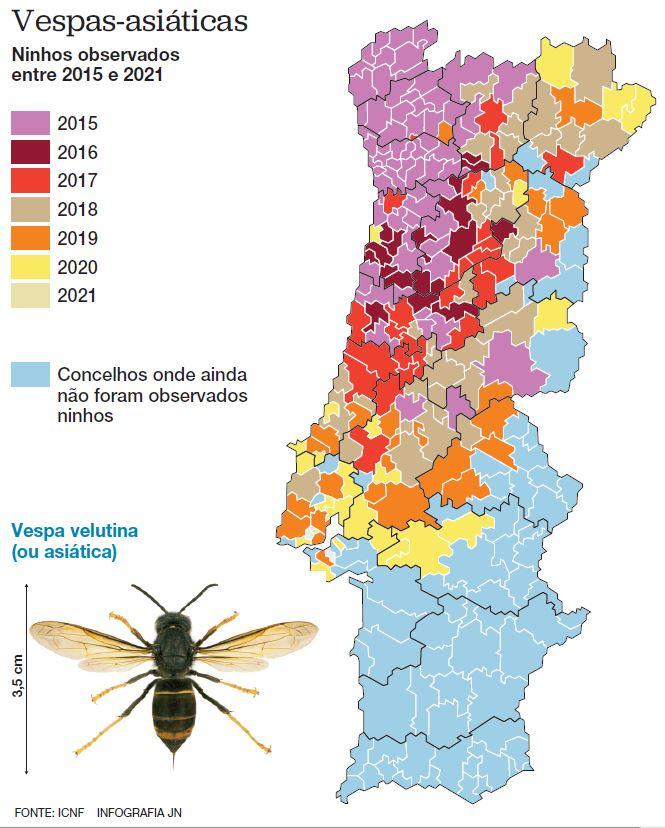 Praga da vespa asiática já chegou a 205 concelhos