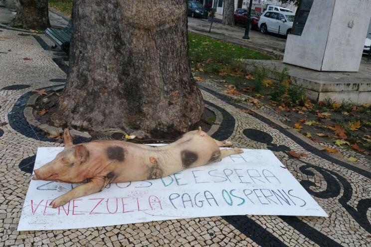 Leitão foi deixado em plena Avenida da LIberdade, no centro de Lisboa
