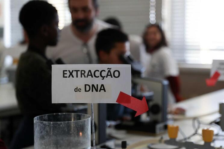 Cientistas desenvolvem em Portugal teste rápido e barato para detetar malária