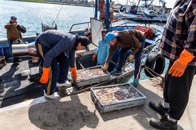 Pescadores na lota da Póvoa de Varzim