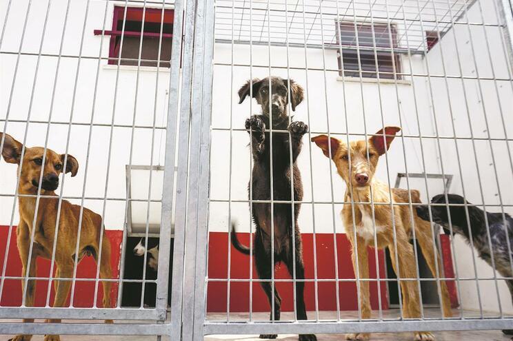 Média de 5,4 casos por dia de crimes contra animais de companhia