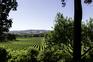 """Um destino chamado """"casa"""" com vista para um mar de vinhas"""