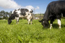 Reitor da Universidade de Coimbra pretende eliminar a carne de vaca das ementas das 14 cantinas