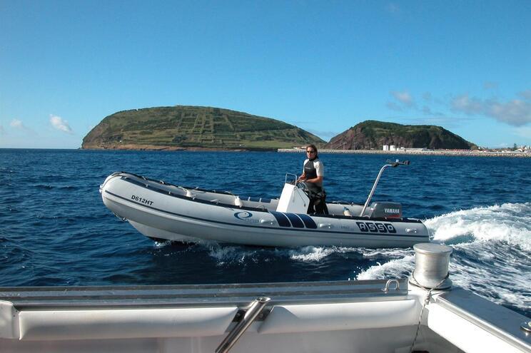 Cientistas descobrem floresta de corais negros no mar dos Açores