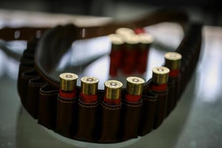 Caçadores repudiam proibição da caça à rola-comum e exigem compensações