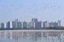 Manto cor-de-rosa na Índia. Milhares de flamingos aproveitam cidade vazia