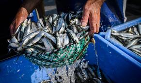 Pesca da sardinha retomada esta segunda-feira e outros temas em 60 segundos