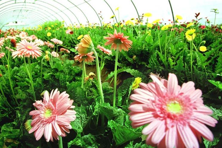 Produtores de plantas e flores reclamam apoios a fundo perdido