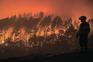 Investigadora defende que recuperação deve ser pensada logo após o fogo
