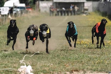 Deputado do PSD equipara corridas em pista a corrida entre um dono e um cão