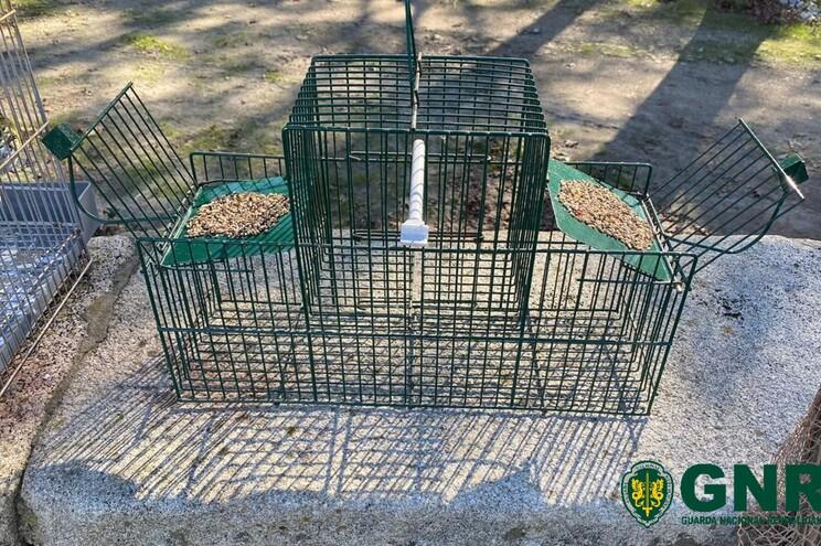 Sistema de som artesanal atraía aves para captura ilegal em Matosinhos
