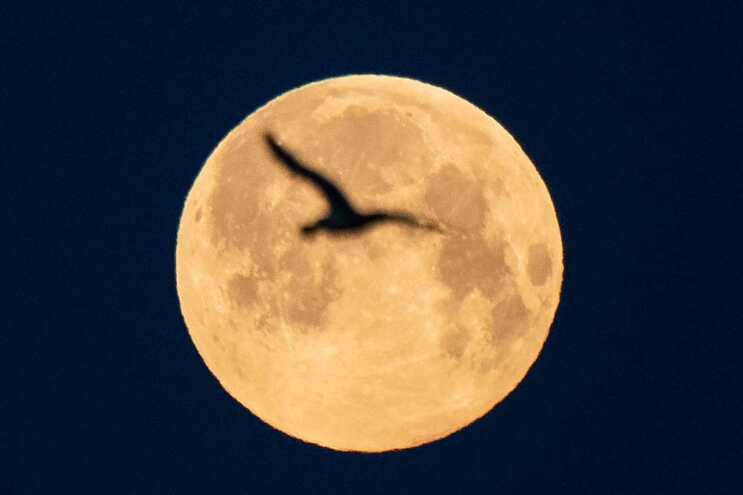 As superluas acontecem quando o satélite, em fase de lua cheia, fica junto do ponto mais próximo à Terra