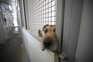 Mais de dois mil animais abatidos nos canis em 2020