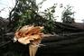 Proteção Civil registou mais de 200 quedas de árvores devido ao vento forte