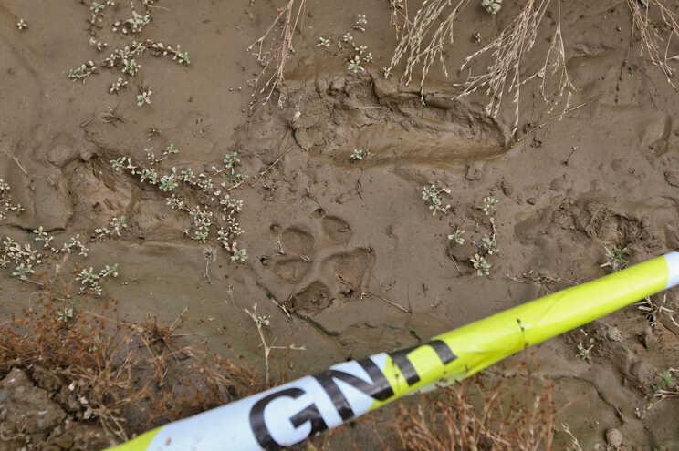 Pegadas de Noah e da cadela da família encontradas durante as buscas