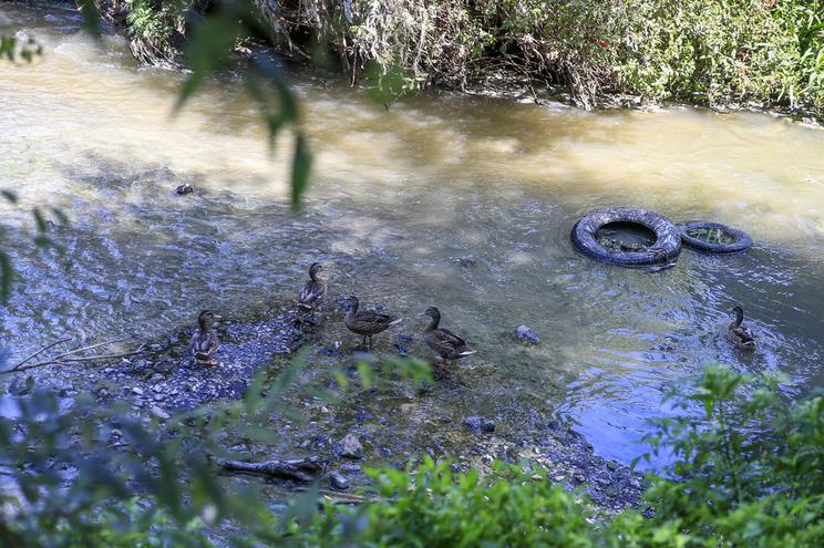 Há mais registos,  mas poucos crimes ambientais chegam aos tribunais