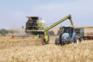 Preço do trigo está 41% mais caro no mercado mundial